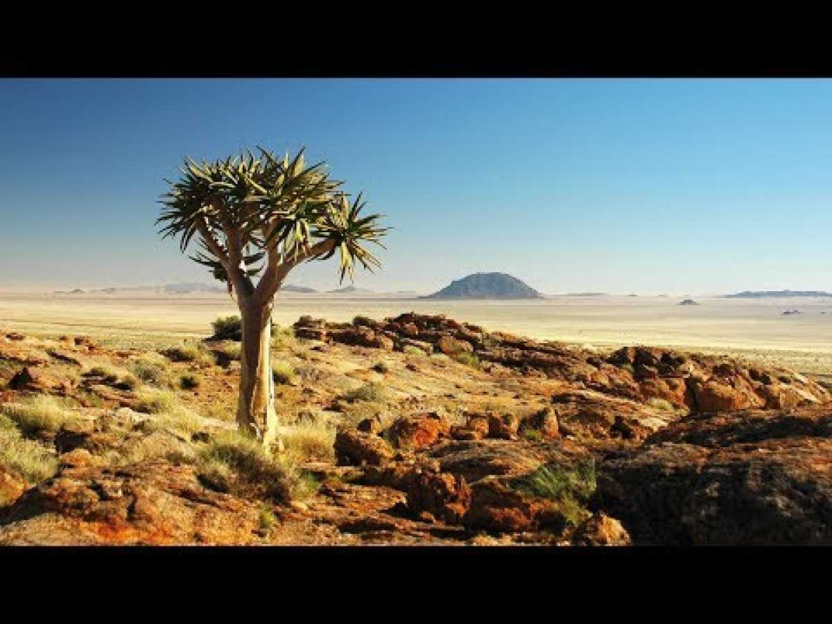 Scorching Wild Namibia (HD) - Nature Documentary ✔