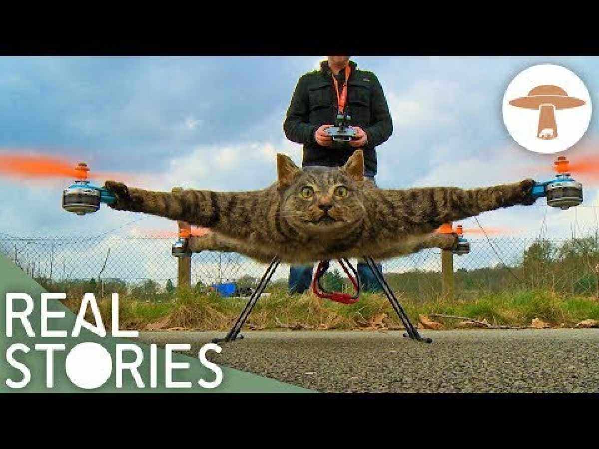 All Creatures Great and Stuffed (Extraordinary Taxidermy Documentary) | Real Stories