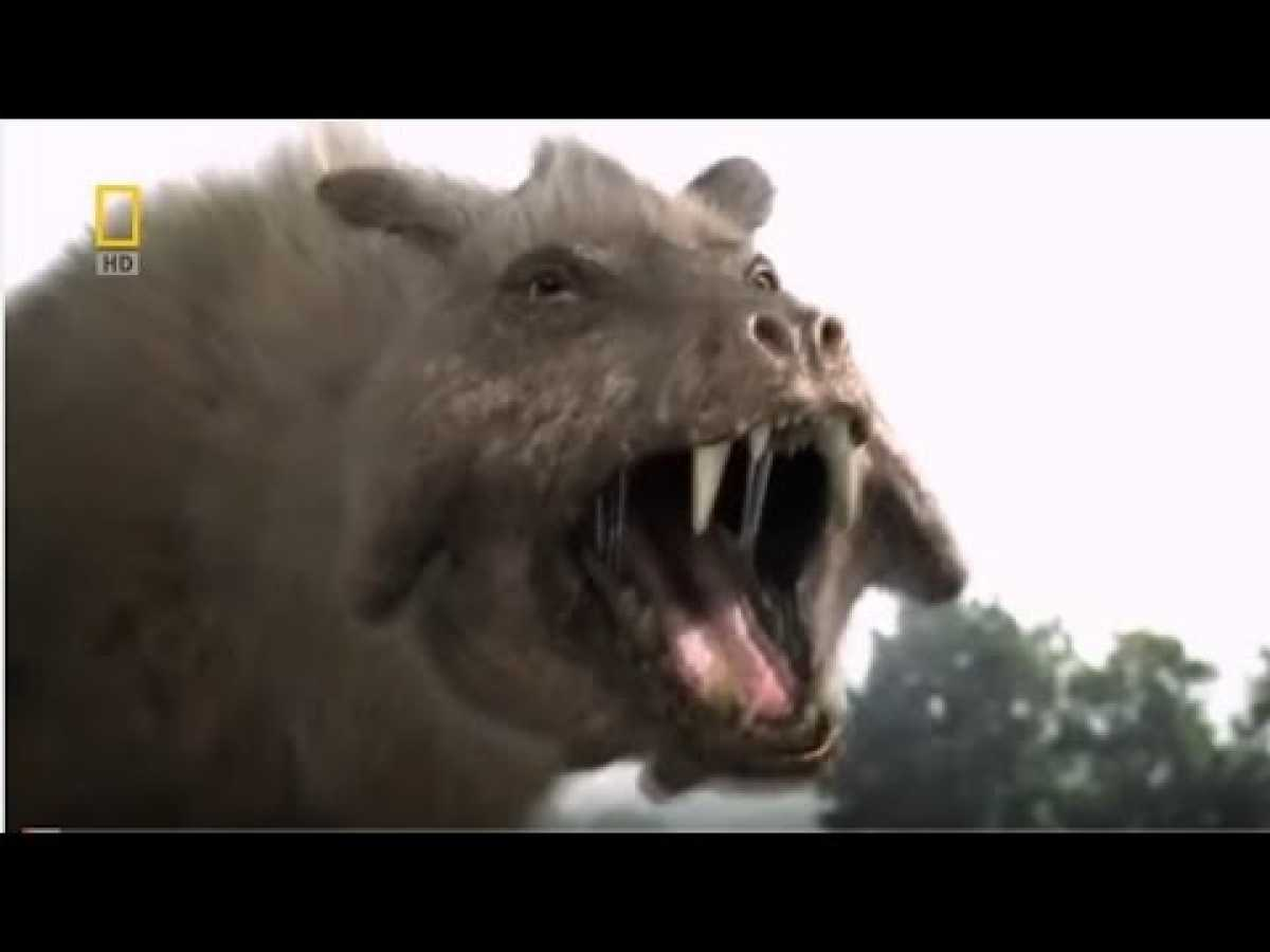 The Pig From Hell - HD National Geographic Dinosaur Documentaries