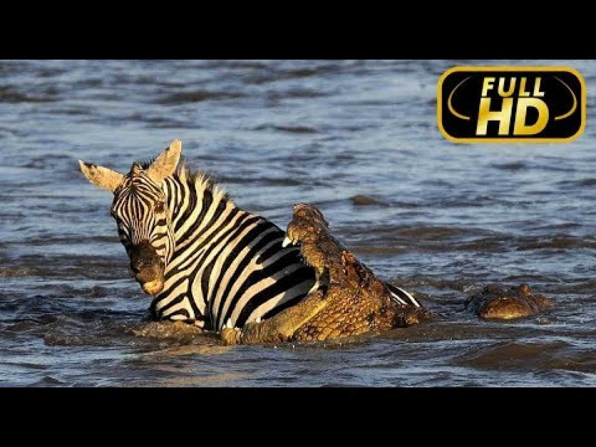 Africa's Blood River. Exclusive / FULL HD - Documentary Films on Amazing Animals TV
