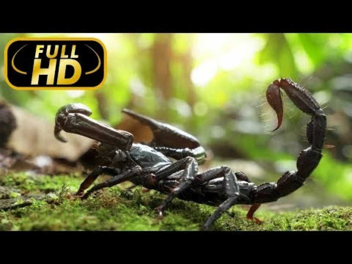 THE MOST DANGEROUS ANIMALS. Forests / FULL HD - Documentary Films on Amazing Animals TV