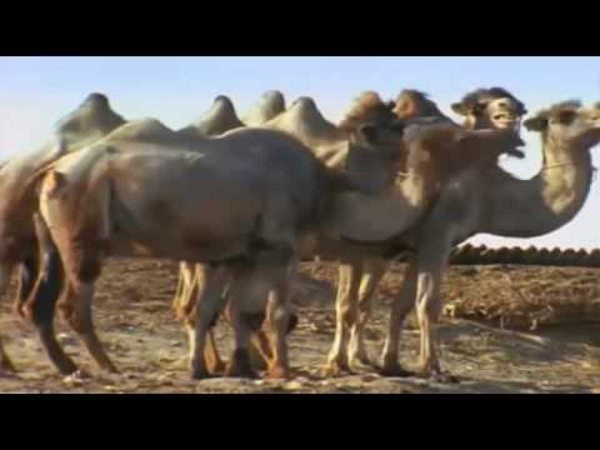 Nomads of Kazakhstan - Nature Documentary on the Wildlife of Kazakhstan