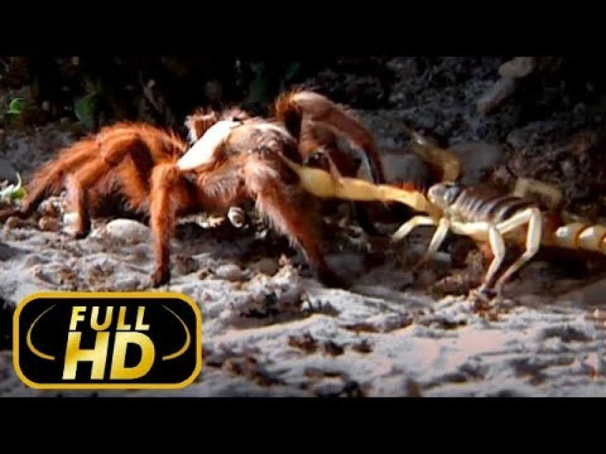 THE MOST DANGEROUS ANIMALS. AMAZON / FULL HD - Documentary Films on Amazing Animals TV