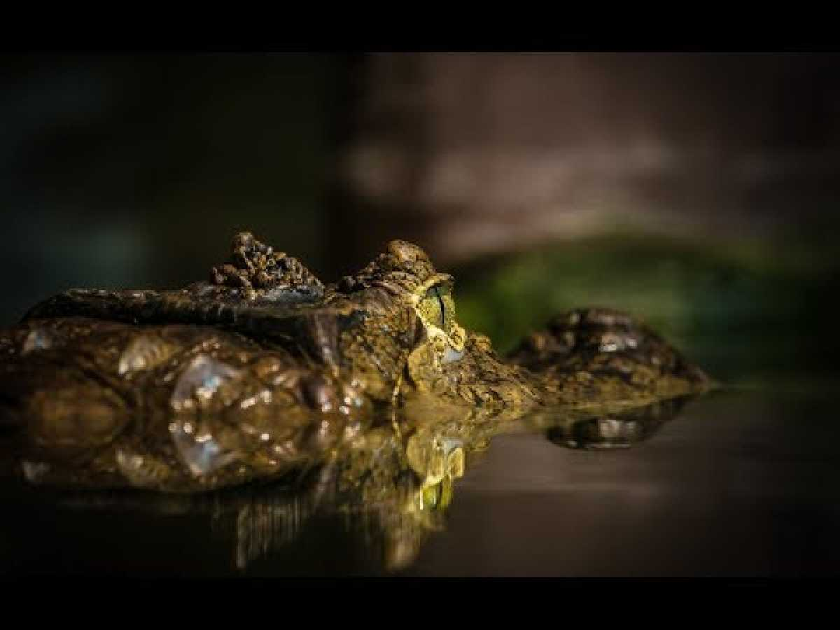 Wild Swamplands: Cajun Country (HD) - Nature Documentary ✔