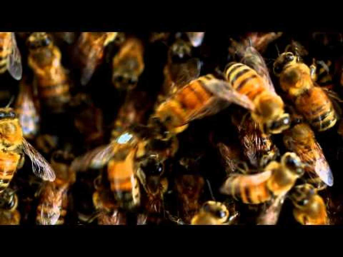 Election Day for Bees | NOVA scienceNOW