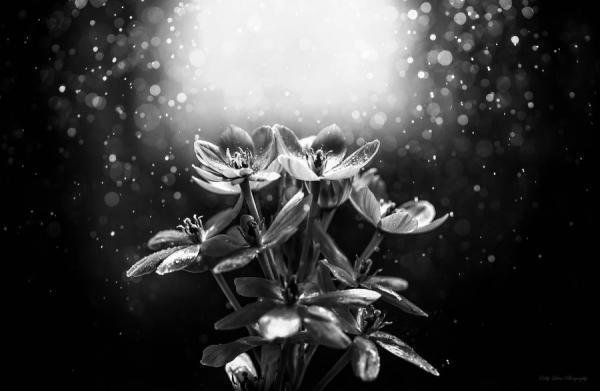 Poem - Last Flower
