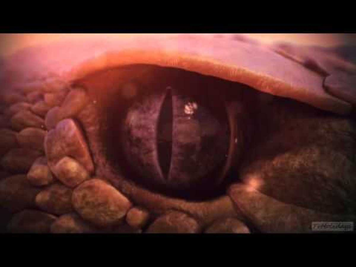 Nat Geo Wild HD Idents 2013 ( Nordic / Central Europe )