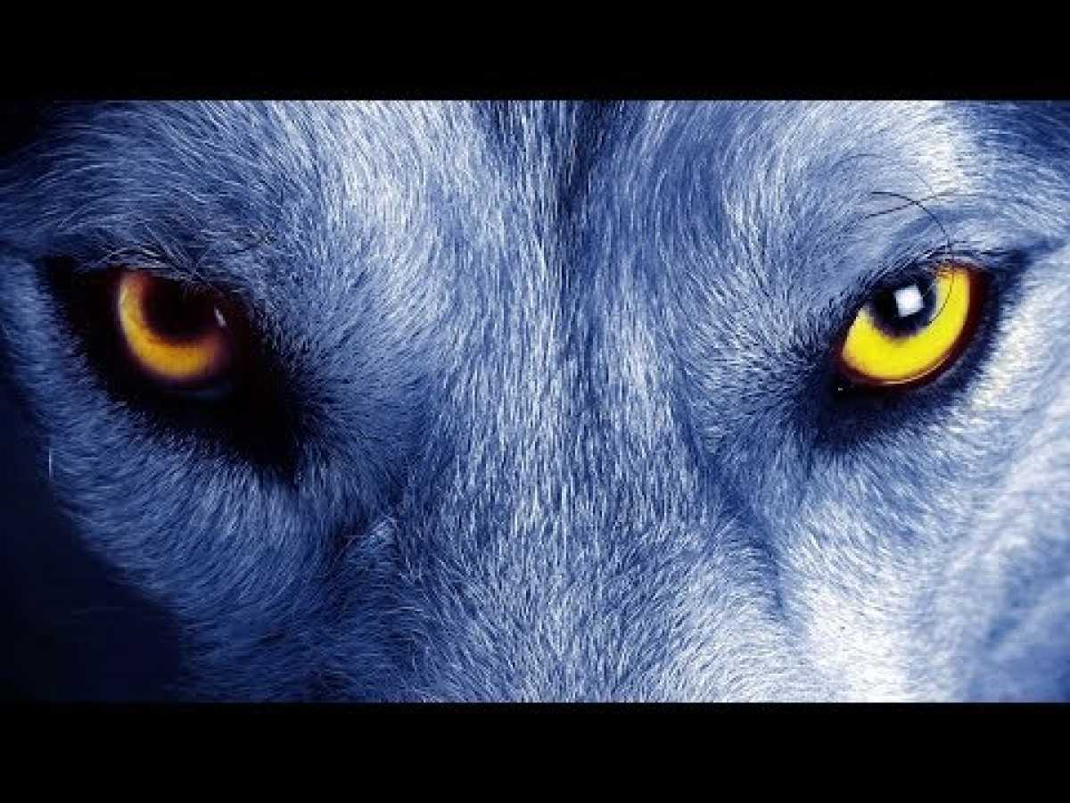 The Truth About Werewolves - Full History Channel Documentary