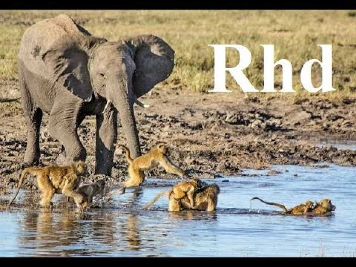 Baboons and Elephants of Chobe River,Nature 2018 full HD Documentary.
