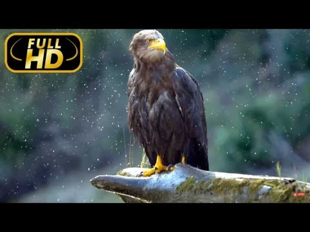 Danube: Europe`s Amazon. From The Black Forest To The Black Sea / FULL HD - Doc. Amazing Animals TV