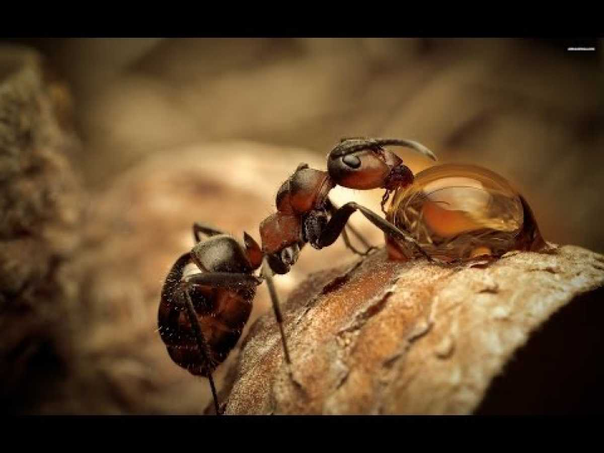 Ants: Nature's Secret Force - Nature Documentary ✔